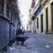 Dog, Havana, Cuba — Stock Photo #27839475