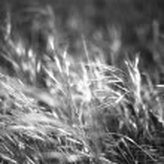 Wild Grasses, Suffolk — Stock Photo