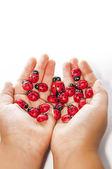 Ladybug in your hand — Stock Photo