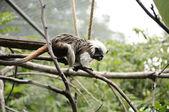 Small monkey — Stock Photo