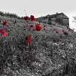 Altes Italienisches Landhaus mit roten Mohn - Stock Photo
