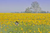 A couple in a flower field — Stock Photo