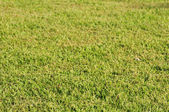 Grass texture in perspective — Stock Photo