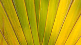 Banana Fan pattern — Foto de Stock