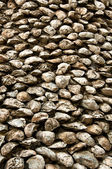Old giant oyster texture — Stock Photo