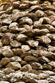 Old giant oyster wall — Stock Photo