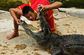 Crocodylidae or crocodile show — Stock Photo