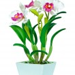 Stock Photo: Artificial pink and white orchid