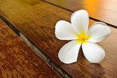 A white plumeria on wood floor — Stock Photo