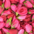 Pink roses and petals background — Stock Photo