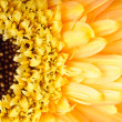 Yellow daisy-gerbera — Stock Photo #18078381