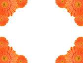 Orange daisy-gerbera frame — Stock Photo