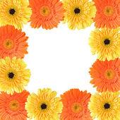 желтые и оранжевые ромашки кадр — Стоковое фото