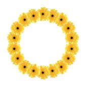 Quadro de círculo amarelo de margaridas — Fotografia Stock