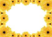 Marco amarillo margarita — Foto de Stock