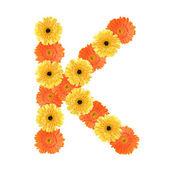 Alphabet K created by flower — Stock Photo