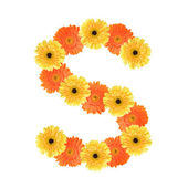 Alphabet S created by flower — Stock Photo