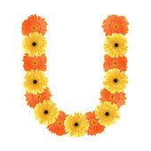 Alphabet U created by flower — Stock Photo
