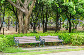 Benches in the park — Stok fotoğraf