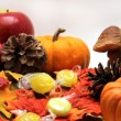 Fall Season Still Life — Stock Photo