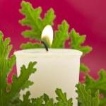 Citronella Candle — Stock Photo #51363141