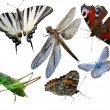 Butterflies, dragonfly, a grasshopper, other insects isolated a white background — Stock Photo