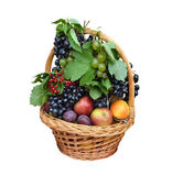 Fruit basket with apples, grapes, plums, cranberry — Stock Photo