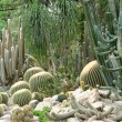 Cactus garden - Stock Photo