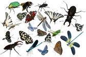 Butterflies bug grasshopper dragonfly — Stock Photo