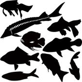 Fish vector isolated on white background — Stock Vector