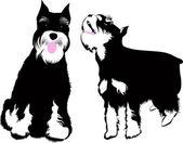 Zwergschnauzer dog vector isolated on white background — Stock Vector