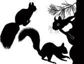 Three squirrels — Stock Vector