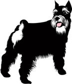 Zwergschnauzer dog — Stock Vector
