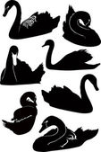 Set of swans — Stock Vector