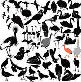 Satz von vögeln — Stockvektor