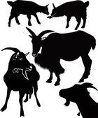 Goat animals — Stock Vector