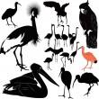 Stock Vector: Set of birds
