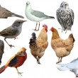 Stock Photo: Bird set
