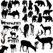 Stock Vector: Animal collection