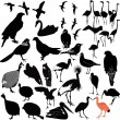 Birds collection — Stock Vector