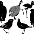 Royalty-Free Stock Vector Image: Birds set up