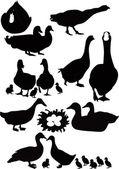 Patos ave — Vector de stock
