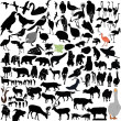 Royalty-Free Stock Imagen vectorial: Vector animals collection