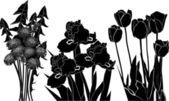 Black aster, irises and tulip — Stock Vector