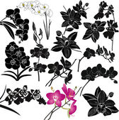 Orchids flowers isolated on white — Stock Vector