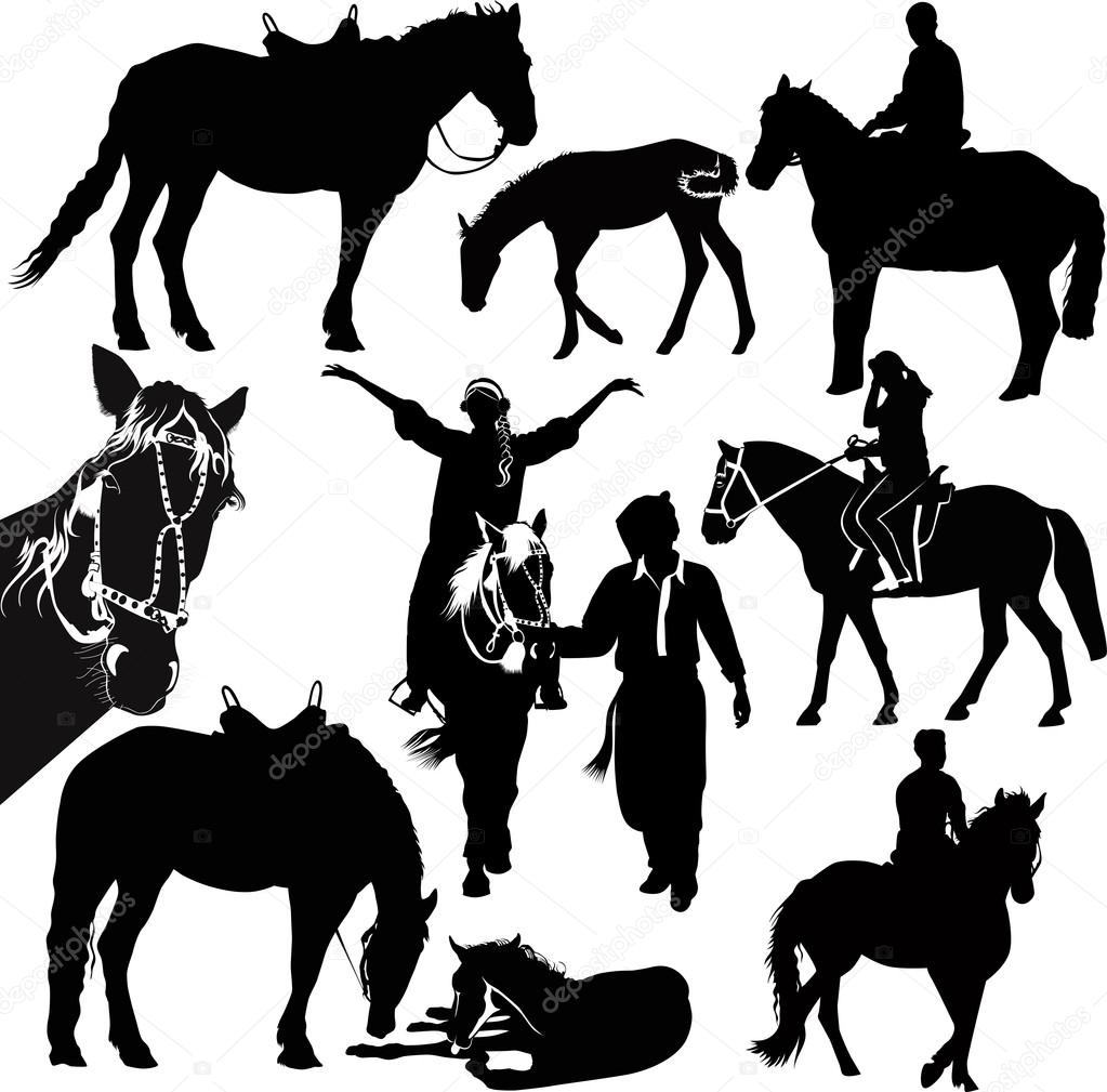 马动物马术运动在白色背景上孤立