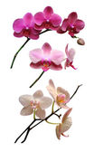 Orchids flowers — Foto Stock
