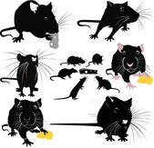 Rats mice cheese animals — Stock Vector