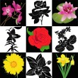 Collection of flowers roses lilies orchid narcissus sunflower vector isolated — Stock Vector