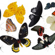 Insect collection of butterflies — Stock fotografie